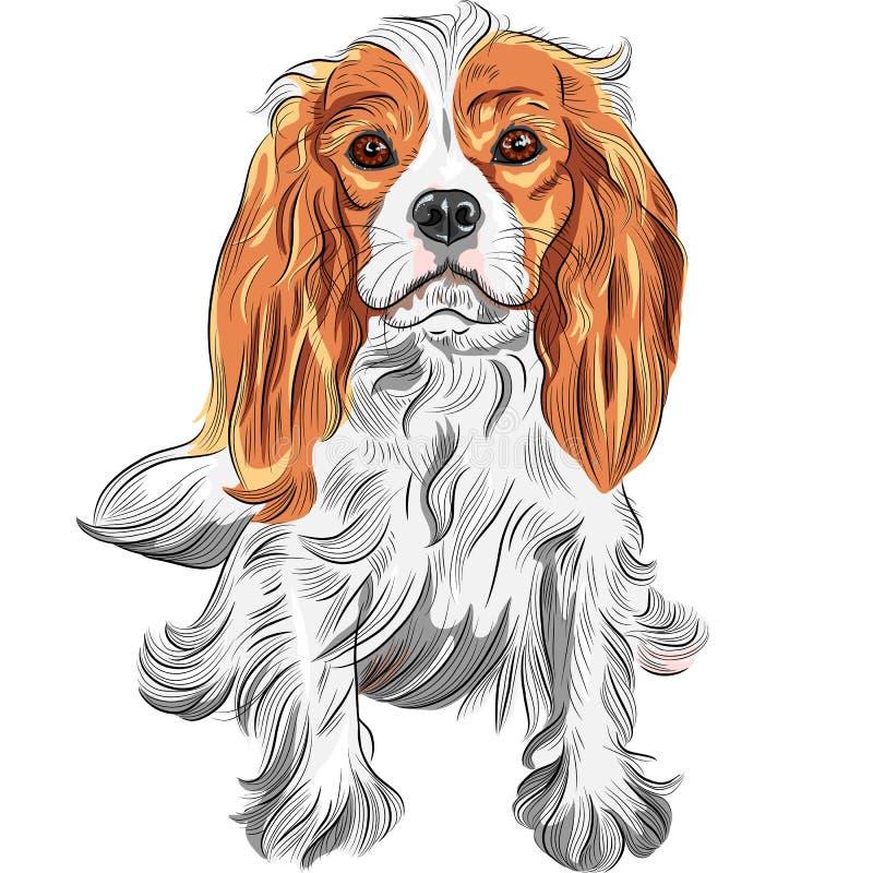 Vectorkleurenschets van de hond Arrogante Koning Charl stock illustratie