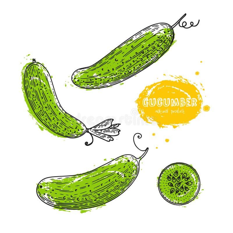 Vectorkomkommerhand getrokken illustratie in de stijl van gravure Gedetailleerde vegetarische voedseltekening Het product van de  stock illustratie