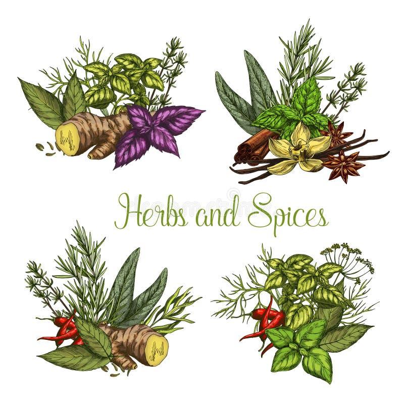 Vectorkruiden en kruidenkruidenschets stock illustratie