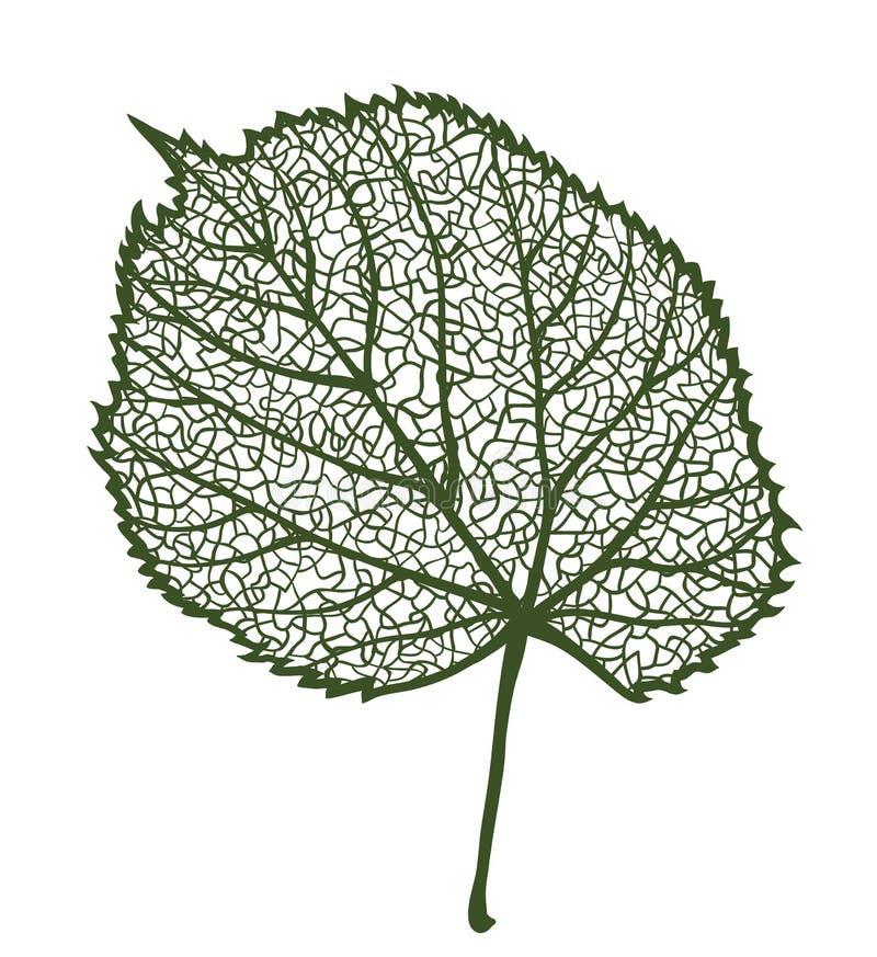 Vectorlindeblad vector illustratie