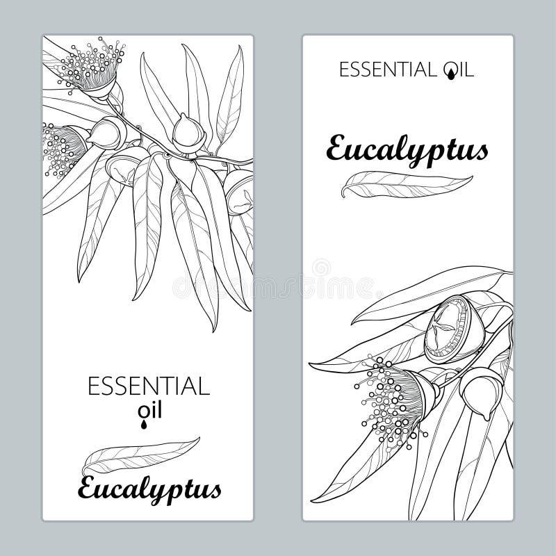 Vectormalplaatjes met globulus, het fruit, de bloem en de bladeren van de overzichtseucalyptus Bloemenontwerp voor affiche, banne stock illustratie