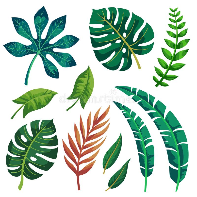 Vectorontwerp van de in Zomer het Tropische Bladeren op witte achtergrond royalty-vrije illustratie