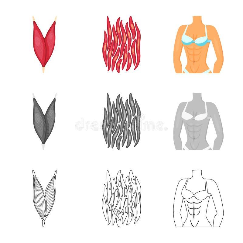 Vectorontwerp van vezel en spierembleem Reeks van vezel en lichaams vectorpictogram voor voorraad vector illustratie