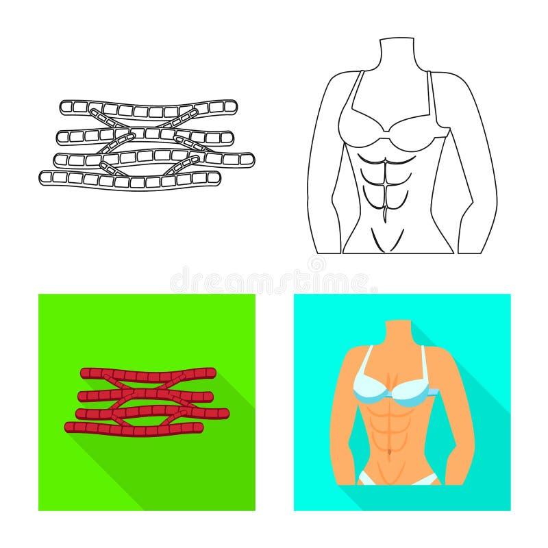 Vectorontwerp van vezel en spiersymbool Reeks van vezel en lichaams vectorpictogram voor voorraad royalty-vrije illustratie