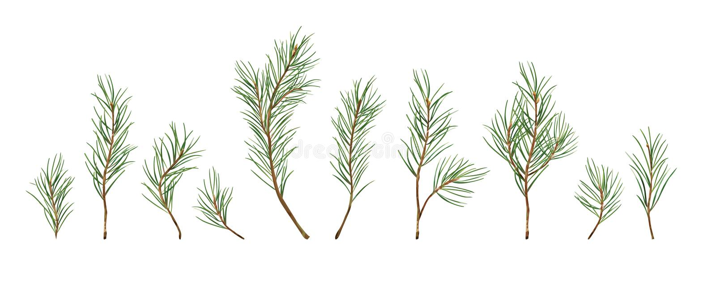 Vectorontwerperelementen geplaatst inzameling van groen natuurlijk bos stock illustratie
