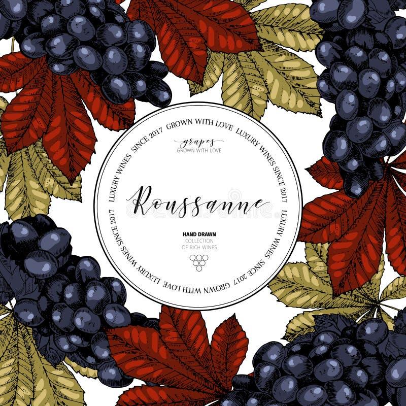 Vectorontwerpmalplaatje van wijn het brandmerken Getrokken hand Gekleurde druif en bladeren Luxewijnen Kadersamenstelling gegrave royalty-vrije illustratie