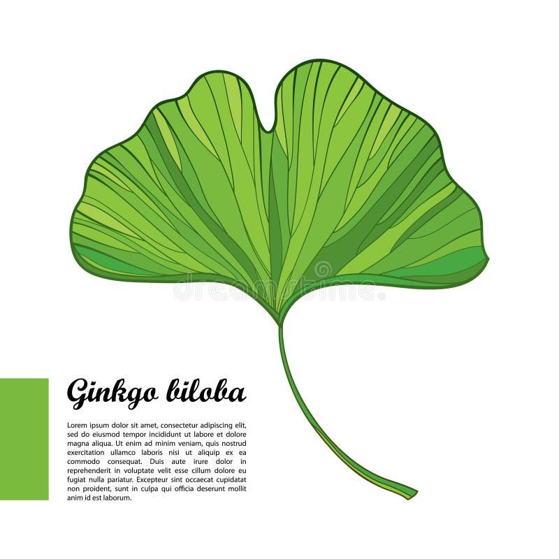 Vectoroverzichts groen blad van bilobaboom van Gingko of Ginkgo-op witte achtergrond vector illustratie