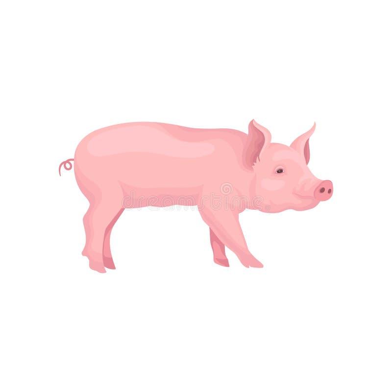 Vectorportret van de status van varken, zijaanzicht Huisdier met roze huid, wervelende staart, vlakke snuit en hoeven royalty-vrije illustratie
