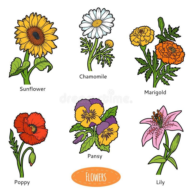 Vectorreeks bloemen, kleureninzameling vector illustratie
