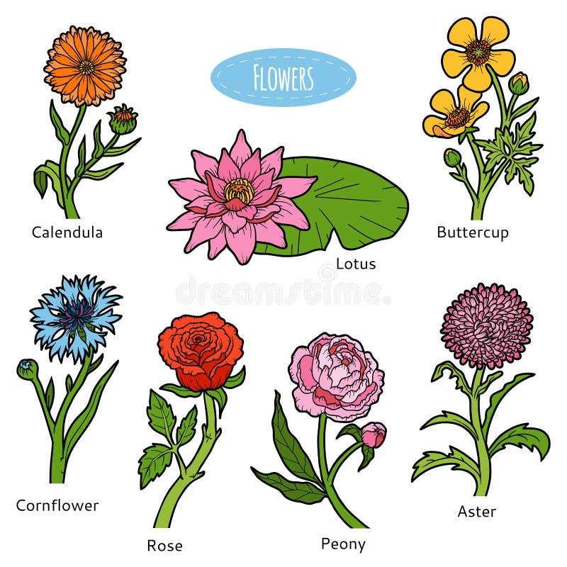 Vectorreeks bloemen, kleureninzameling stock illustratie
