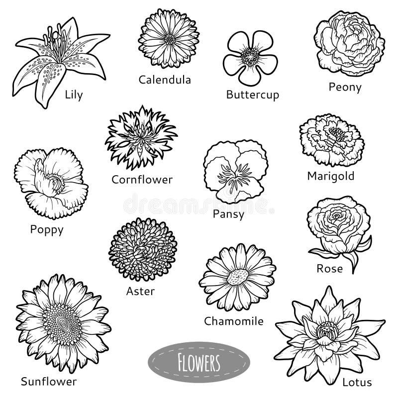 Vectorreeks bloemen, zwart-witte inzameling royalty-vrije illustratie