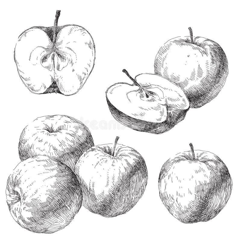 Vectorreeks hand getrokken appelen royalty-vrije illustratie