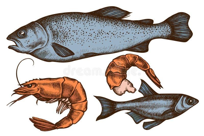 Vectorreeks hand getrokken gekleurde vissen, garnalen royalty-vrije illustratie