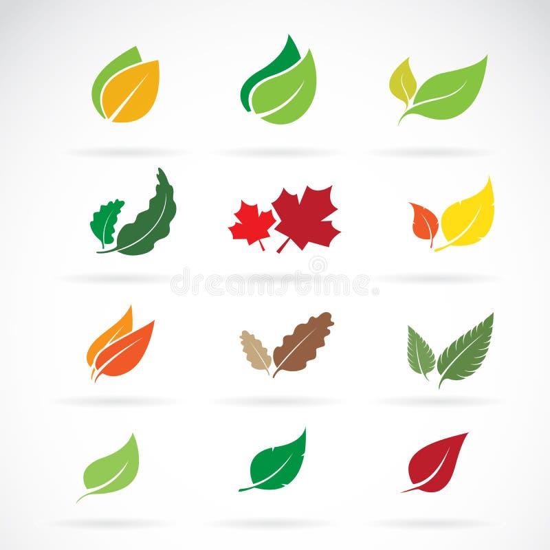 Vectorreeks kleuren de herfst gevallen bladeren op witte achtergrond Ea royalty-vrije illustratie