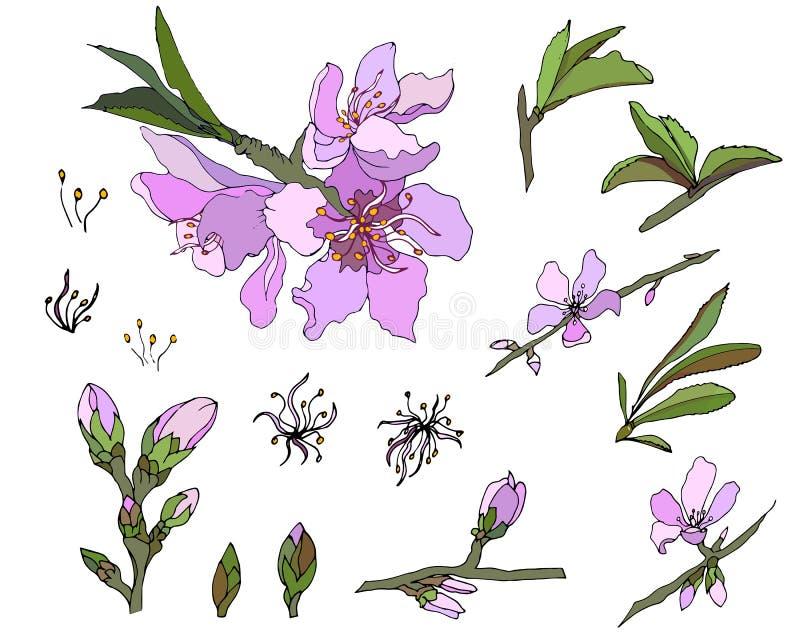 Vectorreeks roze bloemen op een witte achtergrond royalty-vrije illustratie