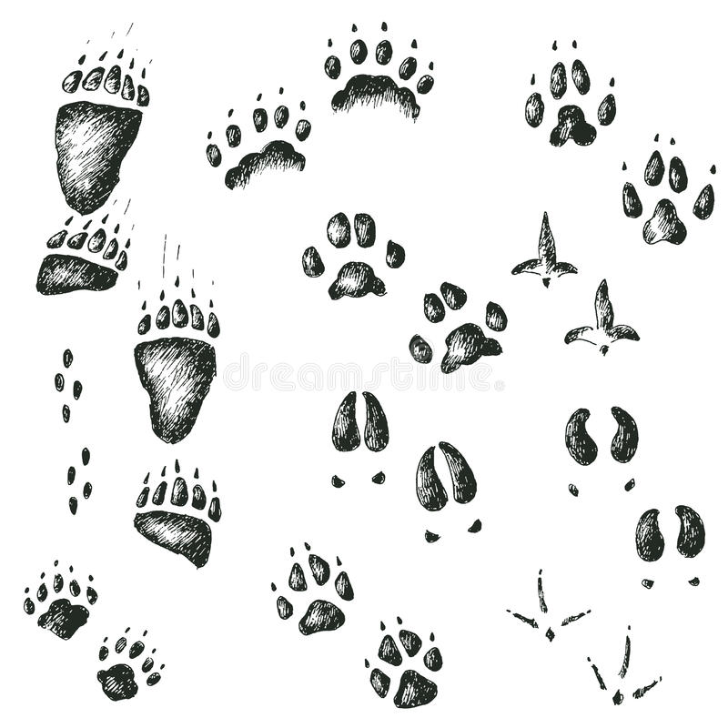 Vectorreeks van het lopen van wilde houten dier en vogelsporen stock illustratie