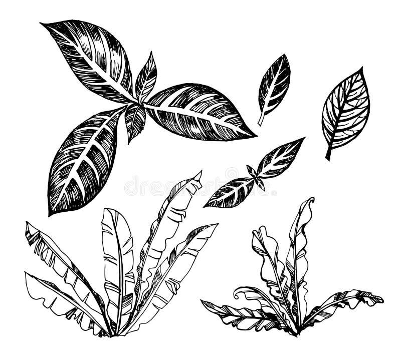 Vectorreeks van illustratie van actuele palmen royalty-vrije illustratie
