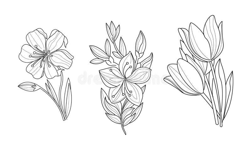 Vectorreeks van 3 schetsmatige sierbloemen o Botanisch Thema Hand getrokken illustraties vector illustratie