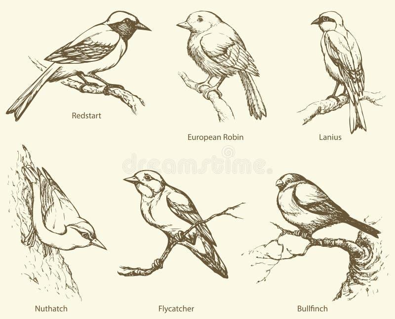 Vectorreeks vogels: Goudvink, Redstart, Nuthatch, Vliegenvanger, stock illustratie