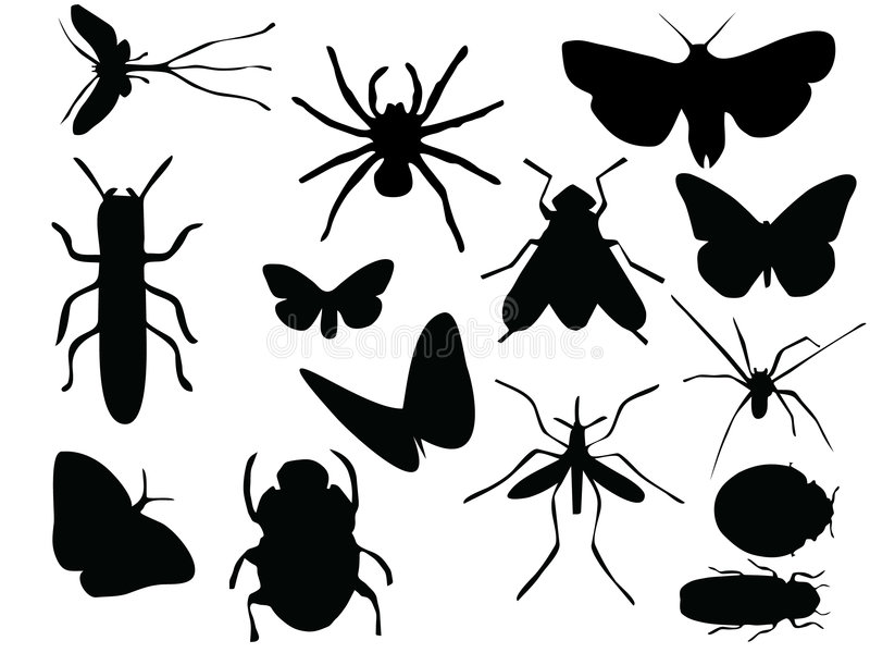 Download Vectors of insects stock vector. Image of spider, wildlife - 3634697