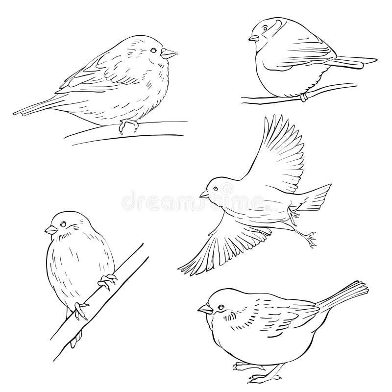 Vectorschets van vogels stock illustratie
