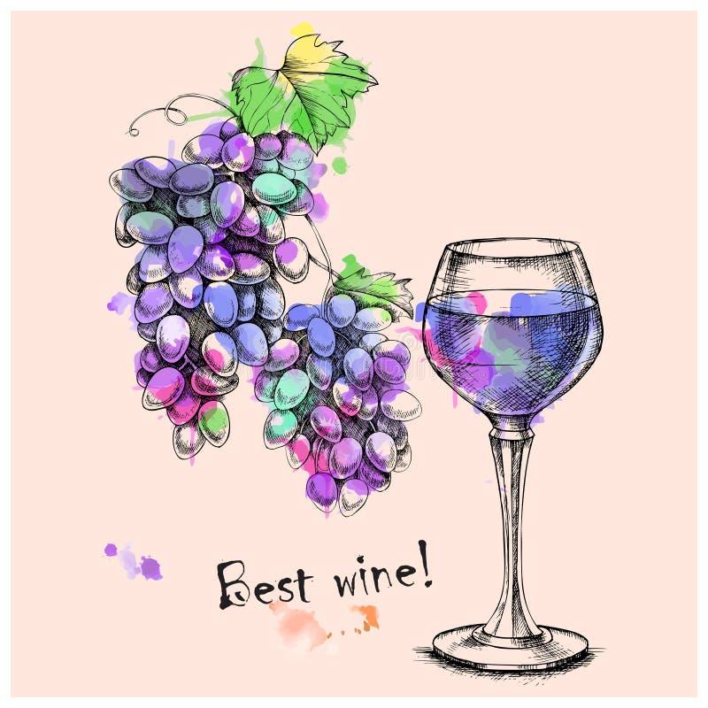 Vectorschetsdruiven, wijn van voor ontwerp royalty-vrije illustratie