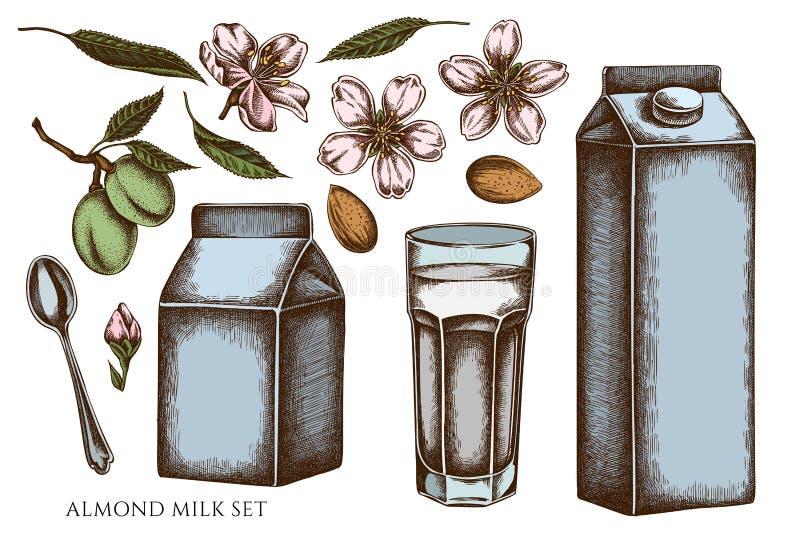 Vectorset met de hand getrokken gekleurde amandel, glas, melkdozen, theelepels stock illustratie