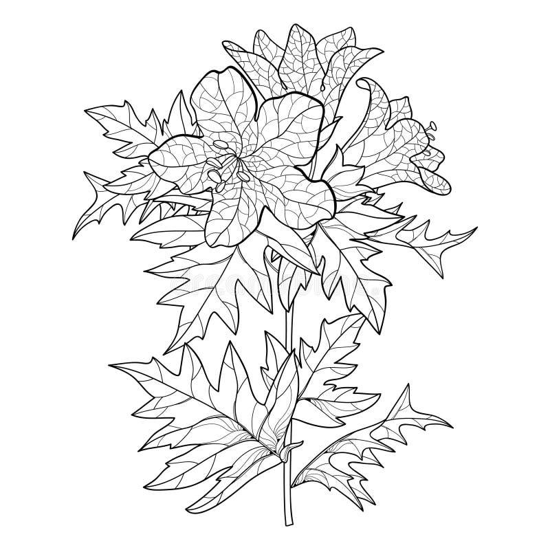 Vectorstam van de plattegrond toxische Hyoscyamus niger of Henbane of stinkende nachtelijke bloembos en ornate leaf in zwart geïs royalty-vrije illustratie