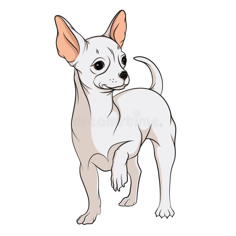 Vectortekening van een chihuahua Geïsoleerder voorwerpen op een witte achtergrond vector illustratie