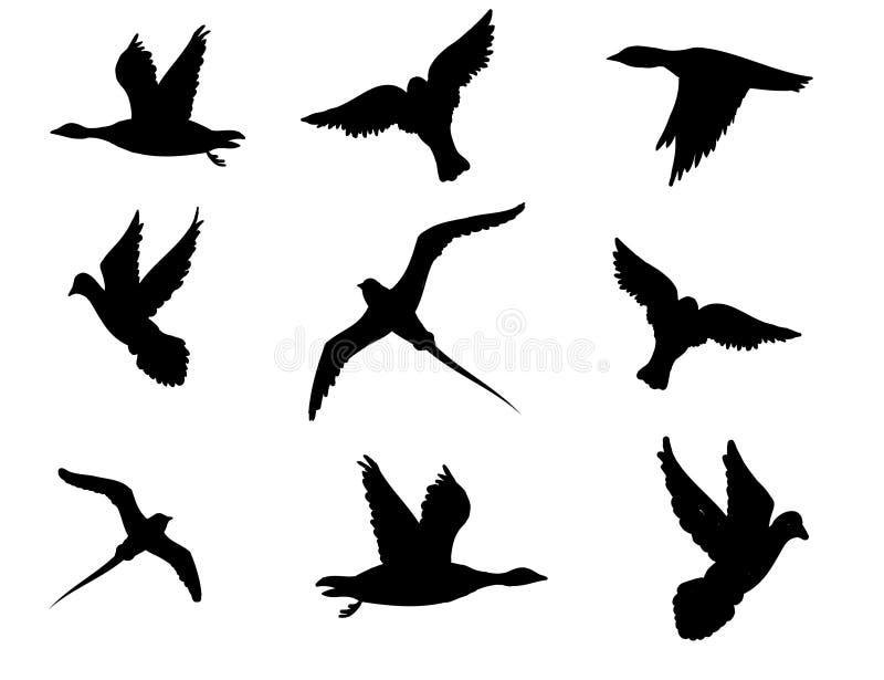 Vectorvogel royalty-vrije stock fotografie