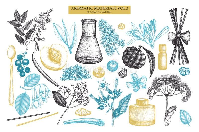 Vectorvruchten en bloemeninzameling Hand getrokken overzichten Uitstekende parfumerie en schoonheidsmiddelen geplaatste ingrediën vector illustratie