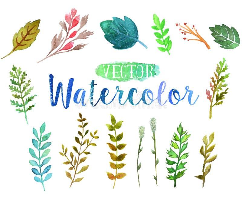 Vectorwaterverfaquarelle takken en bladeren royalty-vrije illustratie