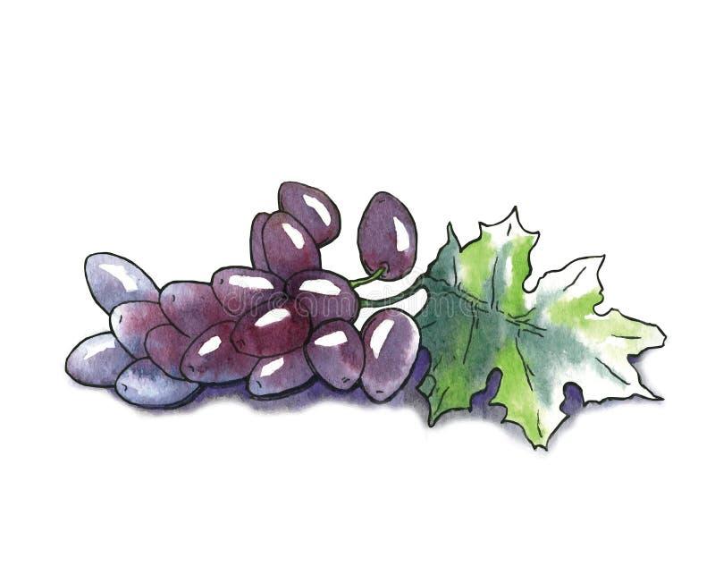 Vectorwaterverfschets van druiven stock illustratie