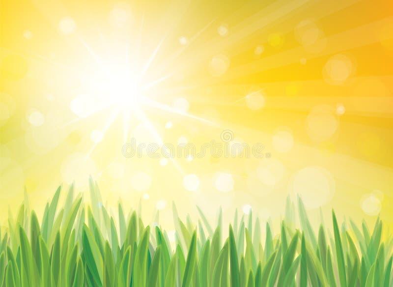 Vectorzonneschijnachtergrond met gras. vector illustratie