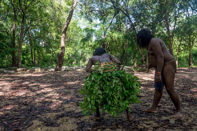 Vedda men hunting. Vedda people performing hunt. Veddas are an indigenous people of Sri Lanka living in tribes in the jungle royalty free stock image