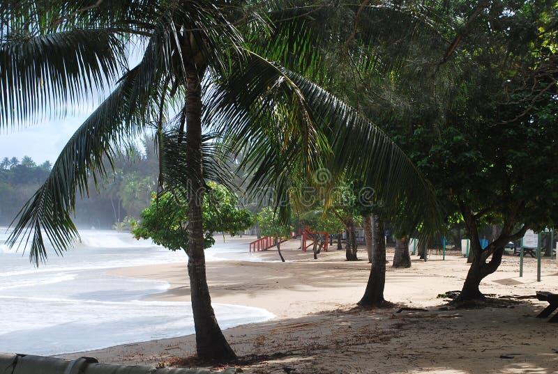 Vedi il mare attraverso gli alberi fotografie stock