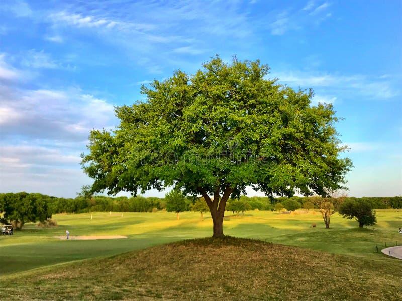 Vedo degli alberi verdi immagine stock