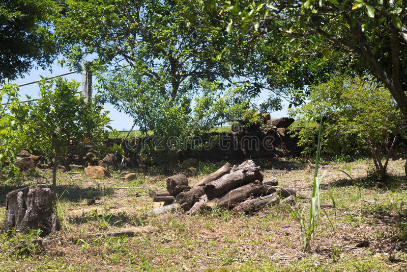 Vedträ i skogen arkivbild