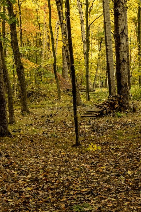 Vedträhög med skyffeln i skogen som lokaliseras i de norr träna fotografering för bildbyråer