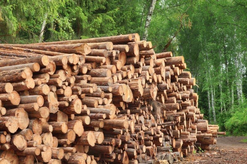 Vedtraven från sågat sörjer och granjournaler för skogsbrukbransch arkivbild