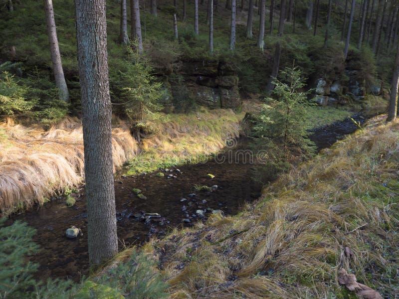 Veduta autunnale sul fiume creek Krinice nel parco nazionale Bohemian Switzerland con bosco ceduo, muschio e pietre immagini stock
