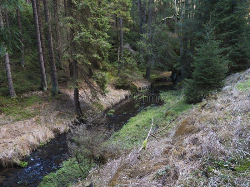 Veduta autunnale sul fiume creek Krinice nel parco nazionale Bohemian Switzerland con bosco ceduo, muschio e pietre immagini stock libere da diritti