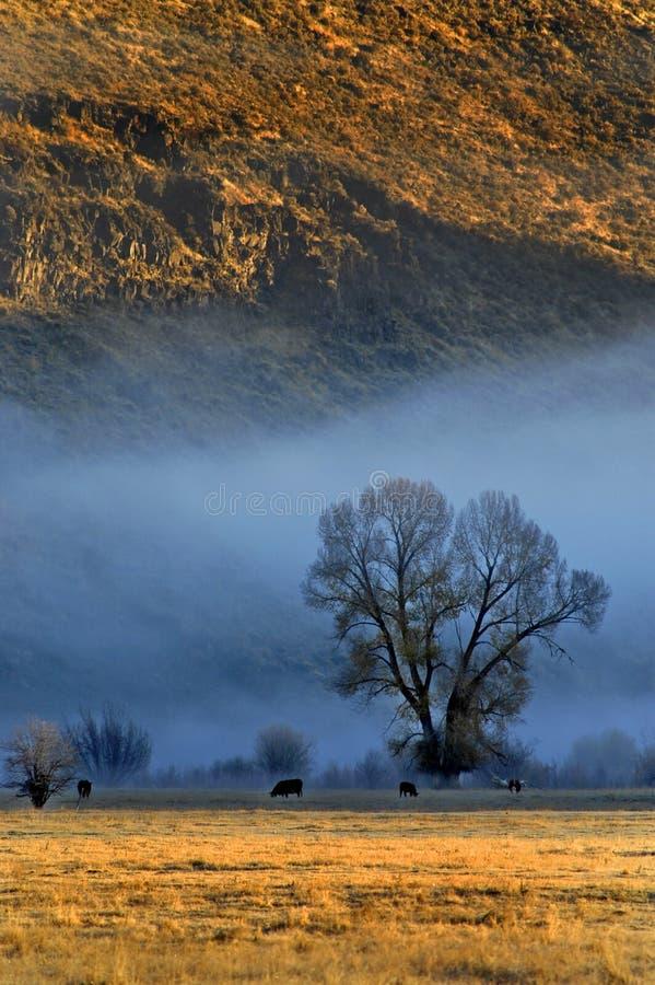 Vee in de Mist van de Ochtend royalty-vrije stock afbeelding