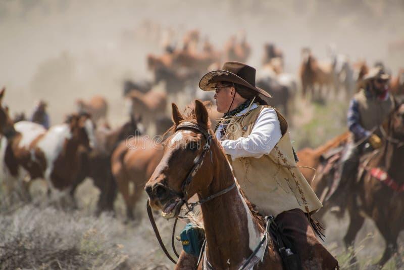 Veedrijfster die wrangler zijn hackamore, paarddeken, loodkabel en zadel dragen om ruimte vast te spijkeren stock afbeeldingen
