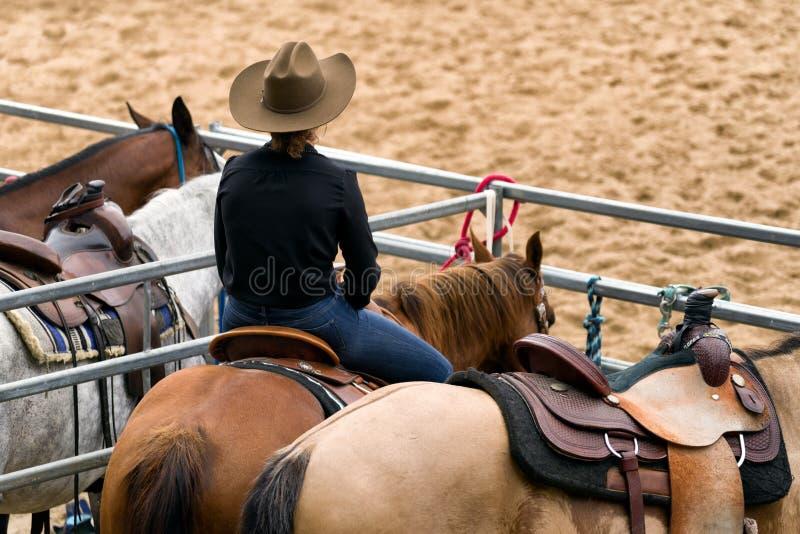 Veedrijfster op paard royalty-vrije stock afbeelding