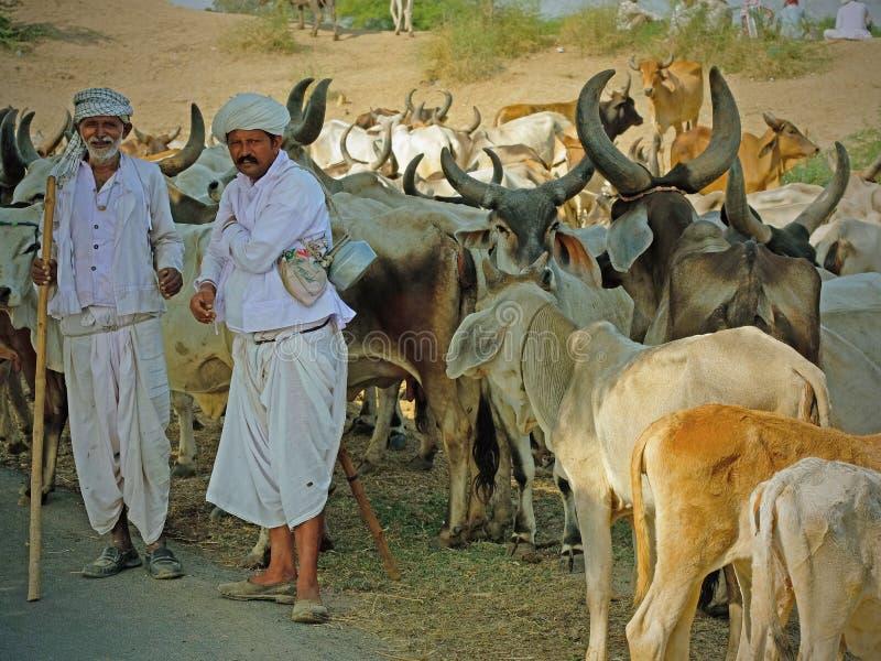 Veehoeders in Gujarat stock afbeeldingen