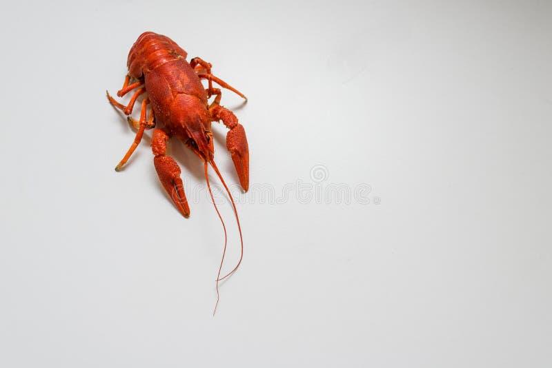 Veel gekookte rode rivierkreeften op een plaat van dille Sluit omhoog Macrowijze Heerlijk zeevruchtenvoedsel royalty-vrije stock afbeeldingen