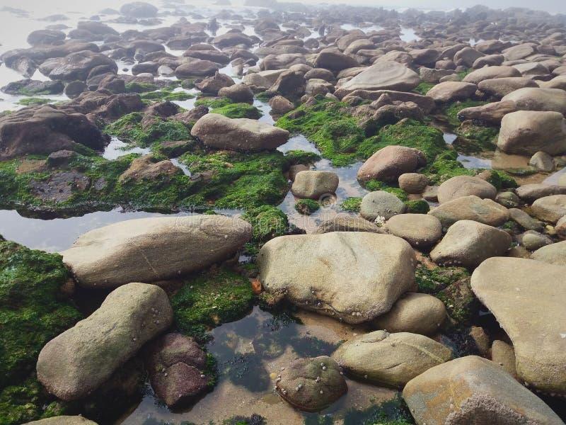 Veel klippen op het strand royalty-vrije stock fotografie