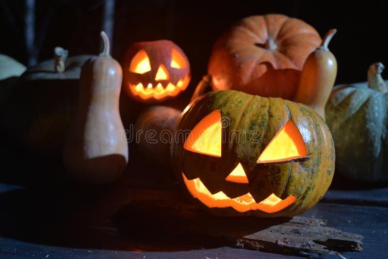Veel pompoenen in donkere bos twee Halloween-pompoenen royalty-vrije stock afbeelding