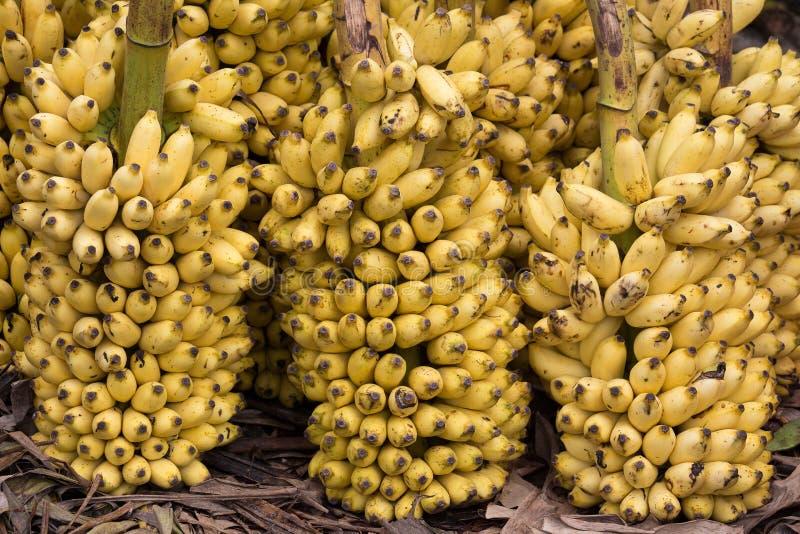 Veel rijpe bananenachtergrond in markt royalty-vrije stock foto